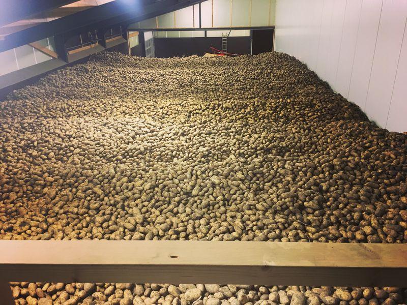 4 & 5 oktober 2016: aardappelen gerooid