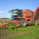28 september 2005: suikerbieten oogst