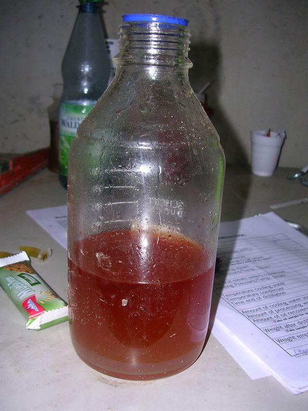 12 augustus 2007; oregano oogst