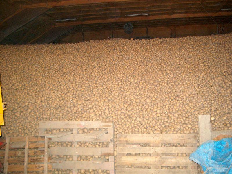 Gewasgroei aardappelen 2003