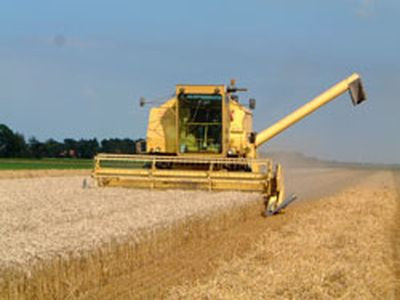 16 augustus 2002; wintertarwe oogst