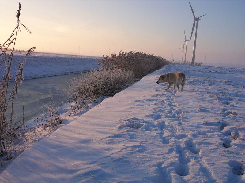 19 december 2010; sneeuw