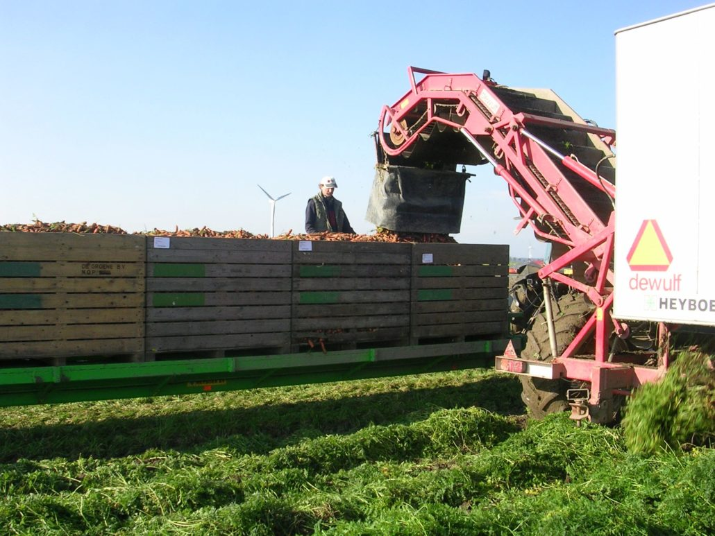 27 oktober 2007; winterpeen oogst