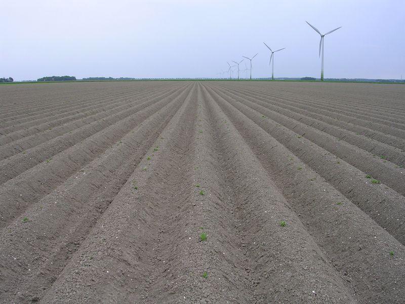 Gewasgroei aardappelen 2008