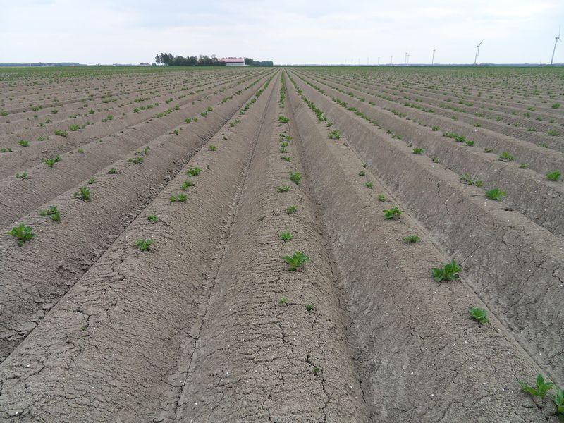 Gewasgroei aardappelen 2010
