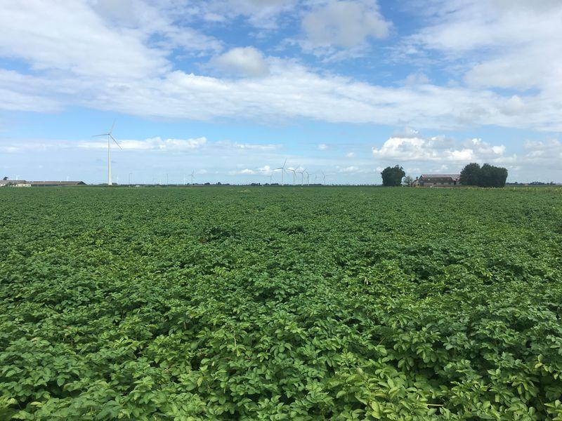 13 augustus 2017; gewasgroei aardappelen, ras is Eurostar