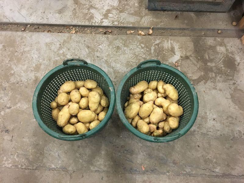 15 september 2017; Laatste proefrooiing aardappelen