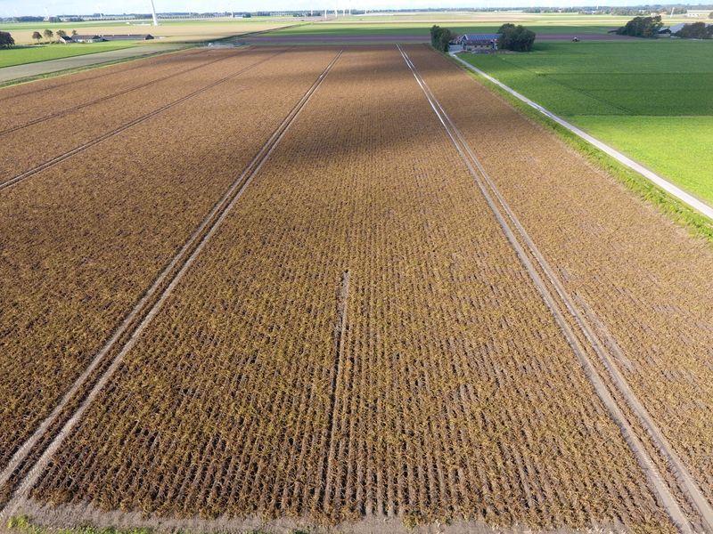 18 september 2017; gewasgroei aardappelen, ras is Eurostar