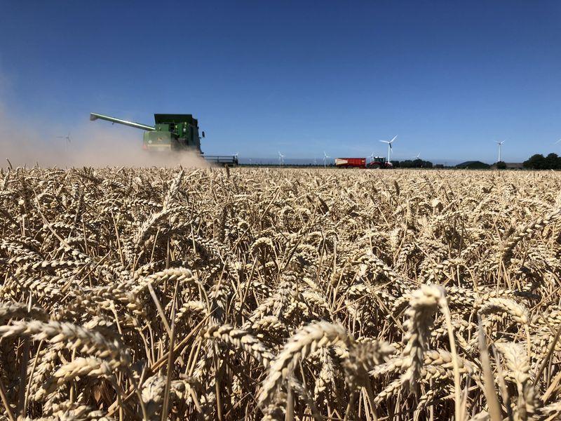 23 juli 2018; wintertarwe oogst