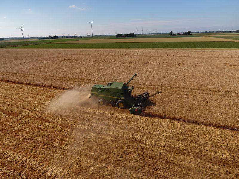 5 juli 2019; wintergerst oogst