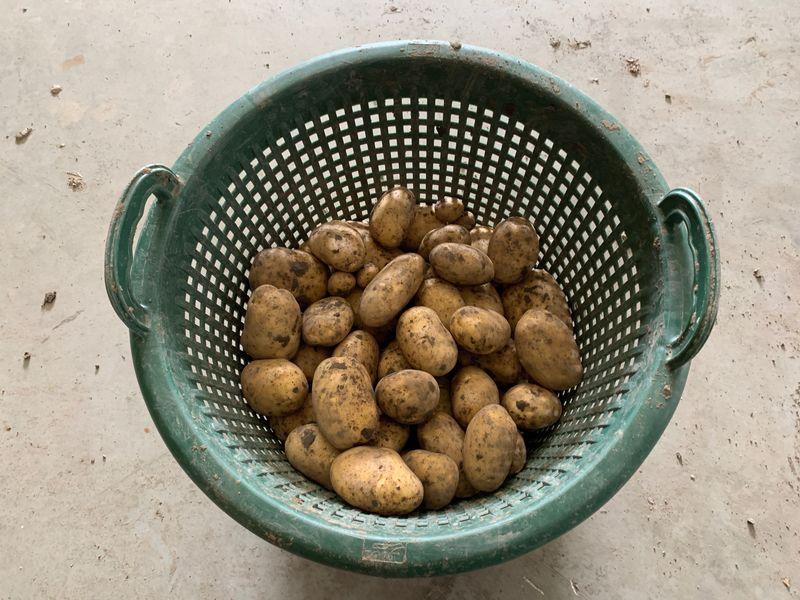 17 september 2019; 4e proefrooiing aardappelen