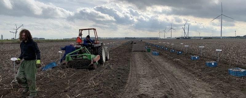 25 oktober 2019; aardappelproefveld Royal Zap rooien