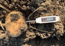 31oktober 2019; aardappels rooien collega