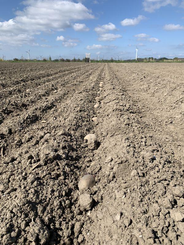 4 mei 2020; Aardappelproefveld Royal Zap/Semagri poten