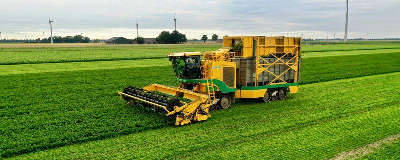 23 juli 2020; peterselie oogst voor VNK herbs