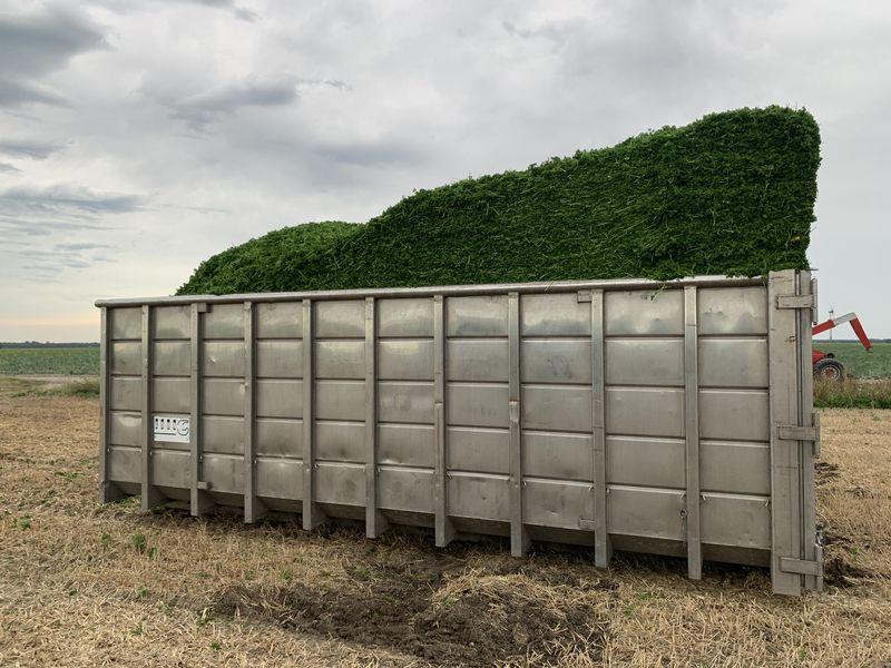 21 augustus 2020; 2e peterselie oogst voor VNK herbs