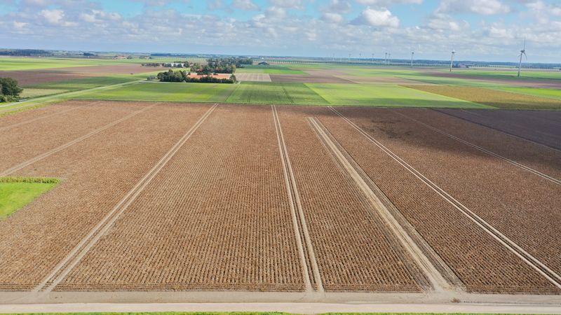 24 september 2020; gewasgroei aardappelen, ras is Lady Anna