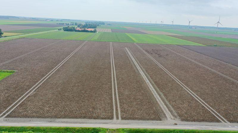 30 september 2020; gewasgroei aardappelen, ras is Lady Anna