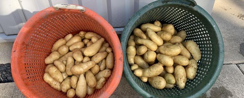 7 september 2020; 4e proefrooiing aardappelen