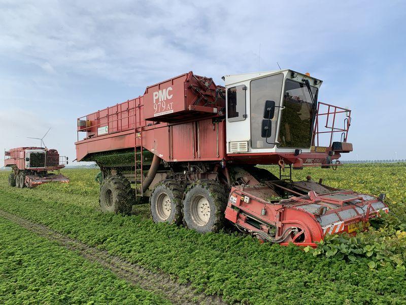 13 september 2020; soja oogst, Dutchedamame