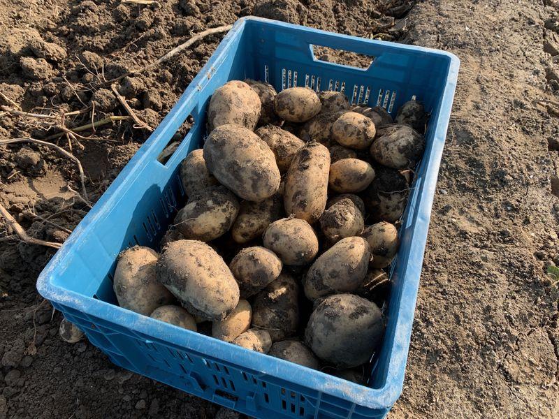 17 september 2020; aardappel proefveld Royal Zap/Semagri rooien
