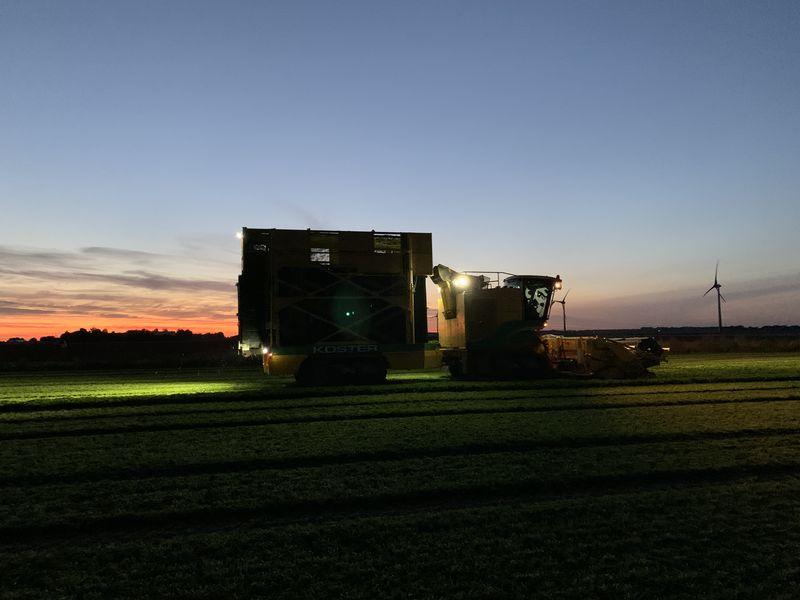 19 september 2020; 3e peterselie oogst voor VNK herbs