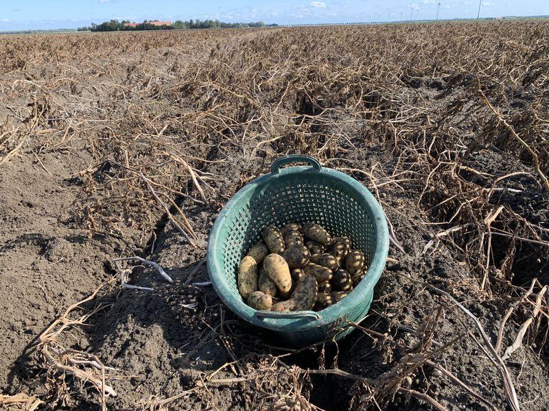 24 september 2020; 5e proefrooiing aardappelen
