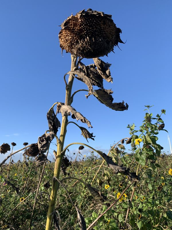 12 november 2020; gewasgroei vogelakker