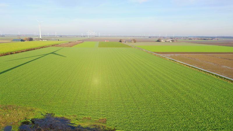 16 december 2020; gewasgroei groenbemester, haver, wikken en bladrammenas