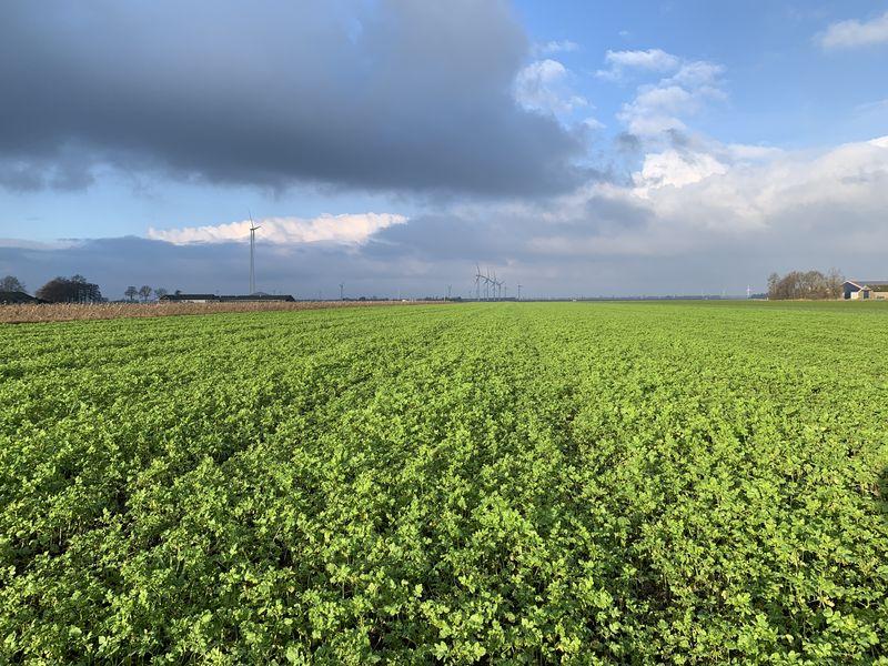 3 januari 2021; gewasgroei groenbemester, gele mosterd, soja perceel