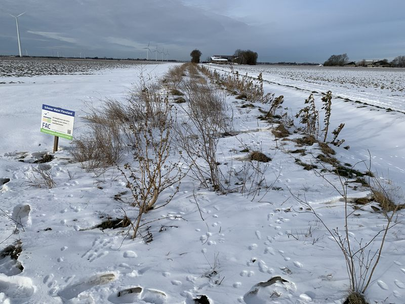 7 t/m 14 februari 2021; Winter op Harrysfarm
