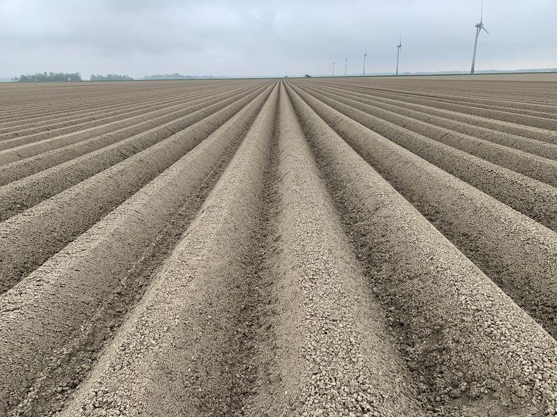 14 mei 2021; Gewasgroei aardappelen; ras is Innovator