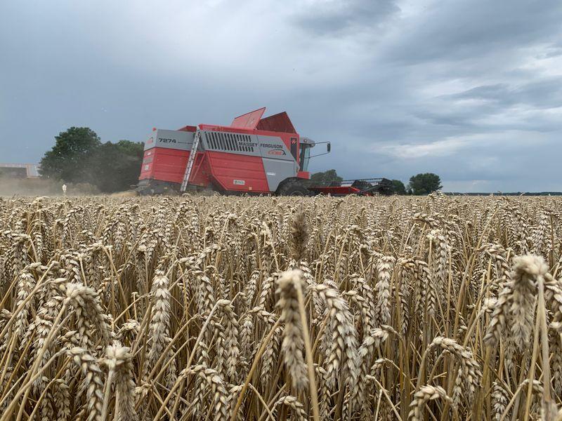 4 augustus 2021; wintertarwe oogst
