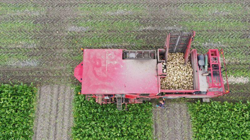 23 september 2021; Proefveld suikerbieten oogsten