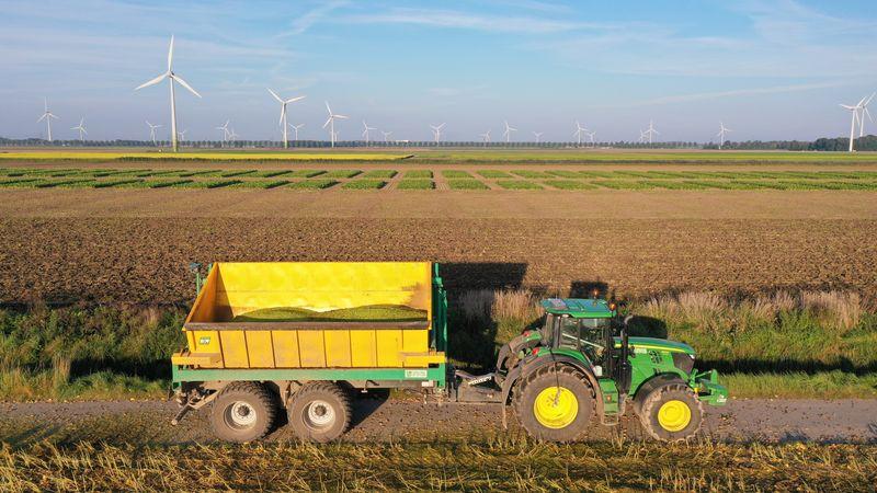 20 september 2021; Edamame (soja) oogst