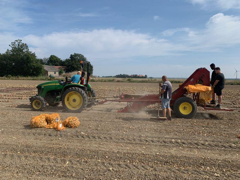 9 september 2021; uien proefveld Seminis oogst
